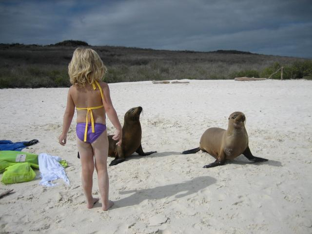 Annette seal waddle