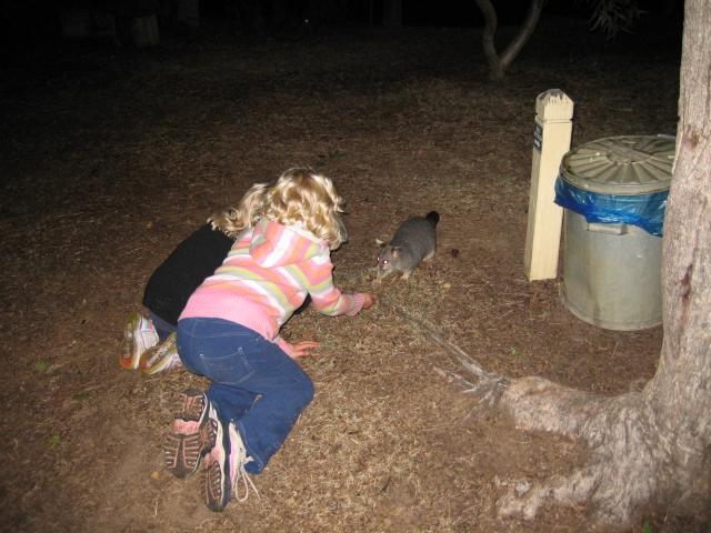 feeding a possum