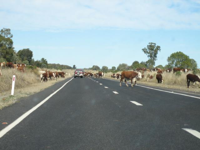 The road to New South Wales
